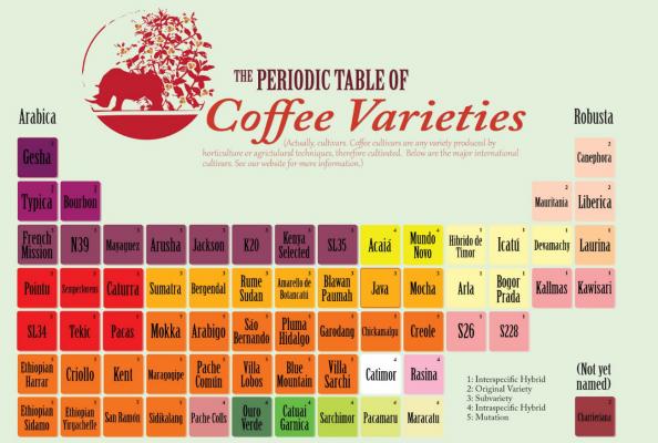 variedades cafes orus